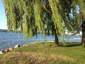 homes for sale in five fields pewaukee